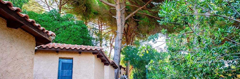 bungalow-economy-immersi-nella-natura-del-cilento